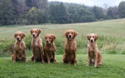 Familientreffen in Velden