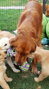 Cara Puppies